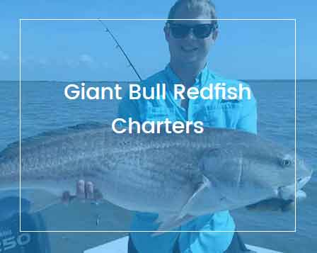 St. Simons Island Fishing Charters - Redfish