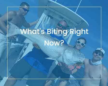 St. Simons Island Fishing Charters - Fishing Report
