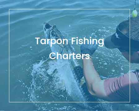 St. Simons Island Fishing Charters - Tarpon Fishing