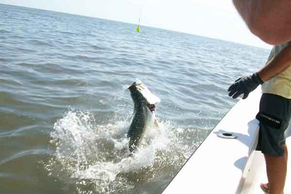 Jekyll Island Tarpon Fishing Charters